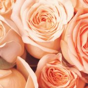 Tucan Flowers